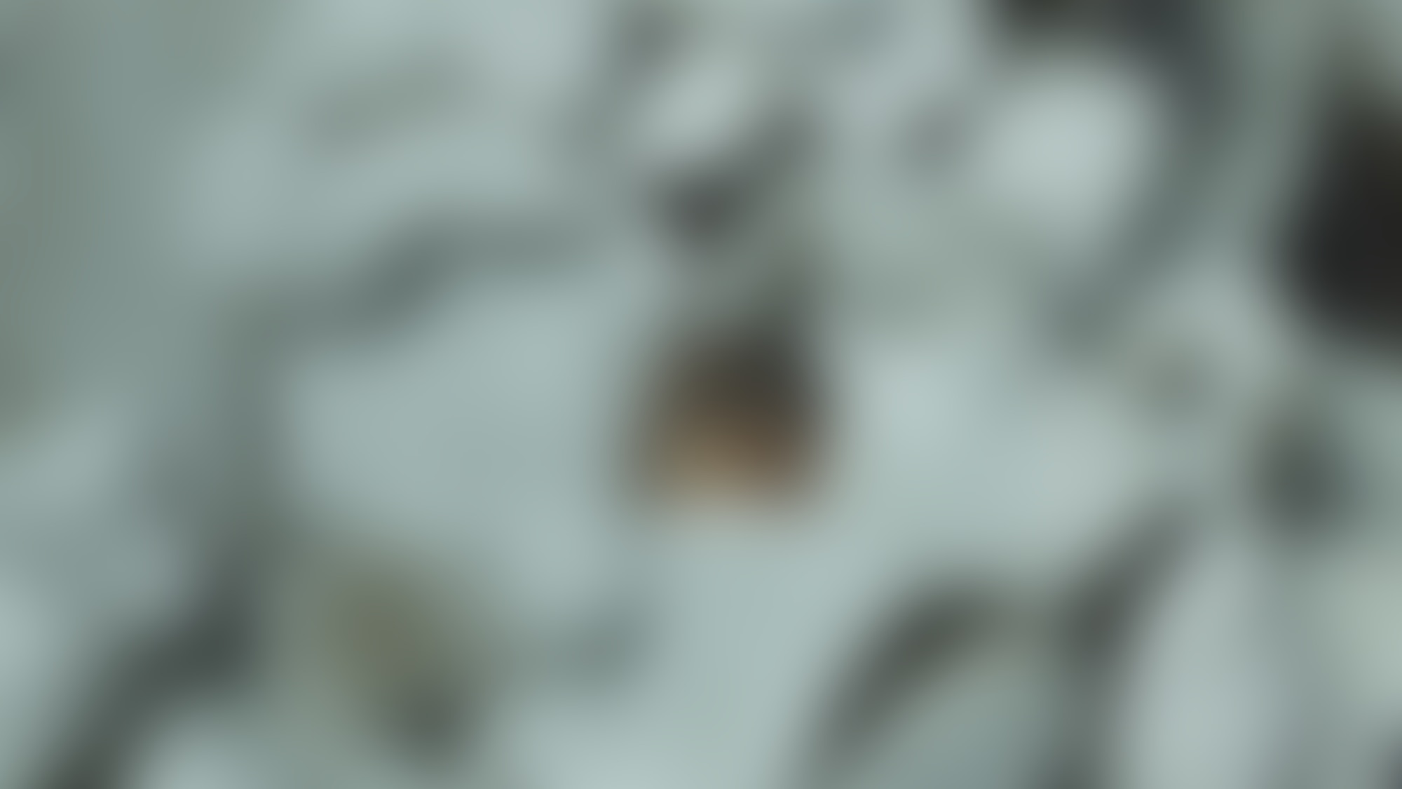 Dawit nm film photography lectureinprogress 02 autocompressfitresizeixlibphp 1 1 0max h2000max w3 D2000q80s4233ebaed720b019636e6c1feffc883f